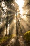 Ljusa solstrålar som skiner sörjer igenom, träd i grön skog arkivfoton