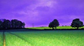 Ljusa spridningar över havrefält på gryning, med en purpurfärgad förhöjd bakgrund royaltyfri bild