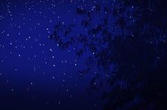 Ljusa stjärnor och bambusidor royaltyfri bild