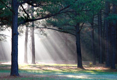 ljusa strålar Fotografering för Bildbyråer