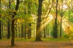 Ljusa strålar av solen i morgonskogen Arkivfoton