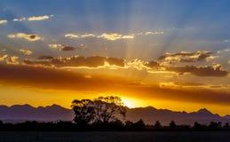 Ljusa strålar för solnedgång och Silhouetted träd Fotografering för Bildbyråer