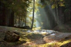 Ljusa strålar till och med träden sen höstliggande Arkivfoto