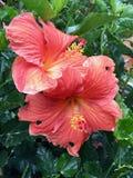 Ljusa tropiska blommor Arkivbilder