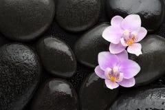 Ljusa två - rosa orkidér som ligger på våta svarta stenar Visat från över Tvål-, handduk- och blommasnowdrops royaltyfri fotografi