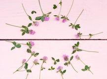 Ljusa växter av släktet Trifolium på en rosa wood bakgrund Royaltyfria Bilder