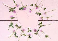 Ljusa växter av släktet Trifolium på en rosa wood bakgrund Royaltyfri Fotografi