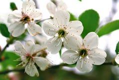 Ljusa vita blommor Arkivbild