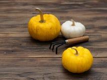 Ljusa vita organiska pumpor för apelsin och med odlaren på mörk trätabellbakgrund Fotografering för Bildbyråer