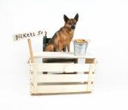 ljusbrun hund royaltyfri fotografi