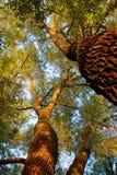 Ljuset av solen till och med träden Arkivfoto