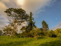 Ljuset av solnedgången över skogen royaltyfria foton