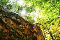 Ljuset som korsar träden och vaggar arkivbilder