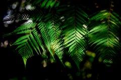 Ljuset som skiner på ormbunkarna i morgonen, är en uppfriskande bild Medan gå i trädgården arkivfoto