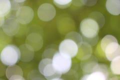 Ljusgrön bakgrund Royaltyfri Foto