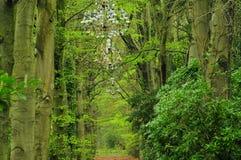 Ljuskrona i skog Royaltyfri Foto