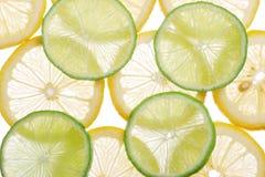 ljusna citrusa skivor Royaltyfria Foton