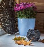 Ljusstake med en stearinljus på en bakgrund av buskechrysanthemuen Royaltyfri Fotografi