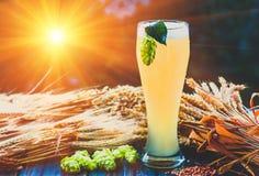 Ljust öl, malt, flygturer, korn gå i ax på tabellen arkivbilder
