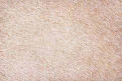 Ljust - abstrakt textur f?r bruna kop?lsmodeller f?r bakgrund royaltyfria bilder