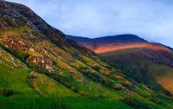 Ljust berg för Skotska högländerna Royaltyfria Foton