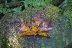 Ljust färgat blad i skogen Arkivbilder