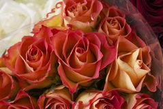 Ljust färgat steg blommor Arkivfoto