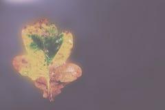 Ljust färgglat höstblad som svävar i vattentappning Retro Fil fotografering för bildbyråer