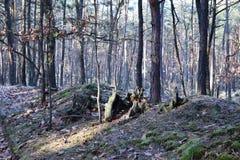 Ljust - för gångbanadag för grön skog naturligt ljus Solskenskogträd Skog i ljus grön natur för skog Royaltyfria Foton