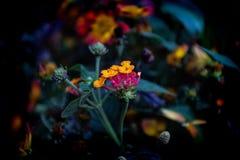 ljust f?rgade blommor arkivfoto
