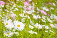 Ljust fjädra blommor Arkivbild