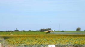 Ljust flygplan besprutar ett fält av solrosor lager videofilmer