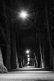 Ljust Forest Walkway Black White Monochrome stillsamt fridsamt PA Royaltyfria Foton