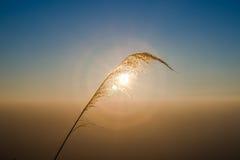 Ljust gräs Arkivfoton