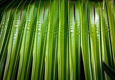 Ljust - gräsplan gömma i handflatan den nya tropiska växten för bakgrund Arkivbild