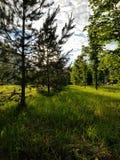 Ljust - gräsplan parkerar och den päls- granen under den gråa himlen arkivfoto