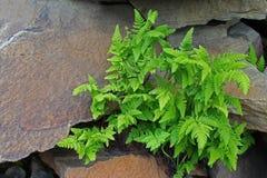 Ljust - gräsplansidor Royaltyfri Fotografi