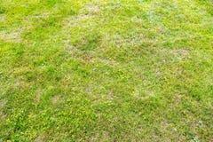 Ljust - grön gräsmatta Arkivfoto
