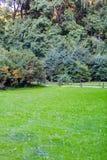 Ljust - grön gräsmatta Royaltyfri Fotografi