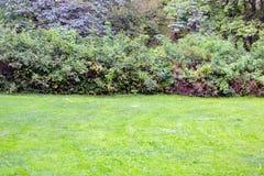 Ljust - grön gräsmatta Royaltyfria Bilder