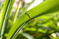 ljust - grön leavesfjäder royaltyfria foton