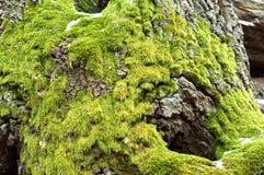 ljust - grön moss Royaltyfria Foton