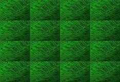LJUST - grön ORMBUNKEBLADTEXTUR royaltyfria bilder