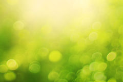Ljust - grön suddig bakgrund Arkivbild