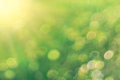 Ljust - grön suddig bakgrund Royaltyfri Bild