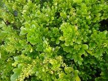 Ljust - gröna sidor med den mycket lilla buketten av gula blommor royaltyfria bilder