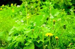 Ljust - gröna växter på gräsmattan arkivfoton