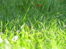 Ljust - grönt gräs som invigas av solen arkivfoton