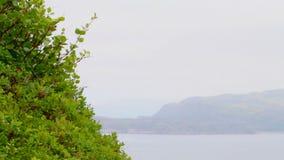 Ljust - grönt polart björkBarents hav lager videofilmer
