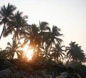 Ljust guld- solljus som kommer till och med raden av palmträd - Payyambalam strand, Kannur, Kerala, Indien Arkivbild